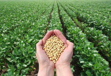 Verbundkomponente Sojaprodukte. Was ist Soja, Nutzen und Schaden für die Gesundheit