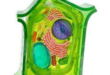 Las diferencias y similitudes entre las células de plantas y animales