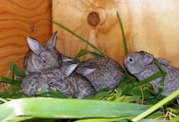 Wymiary ługu macierzystego dla królika z jego własnymi rękami: rysunków. Ług wymiary dla dużych ras królików