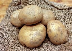 pommes de terre vernalisation avant de les planter dans le sol
