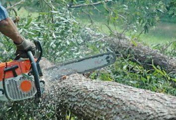 La tala de árboles. La autorización para la tala de árboles