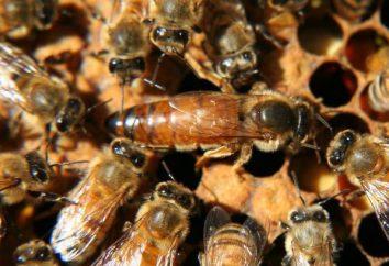 Comment faire une souches d'abeilles Conseils apiculteur novice