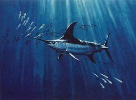 Swordfish. opis