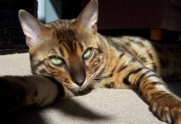 Serengeti – kot, który skacze na własną rękę