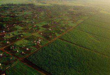 LPH: come applicare? Vantaggi di aziende agricole private