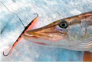 Balanceadores de pique: descrição e comentários. Pesca do inverno no balanceador