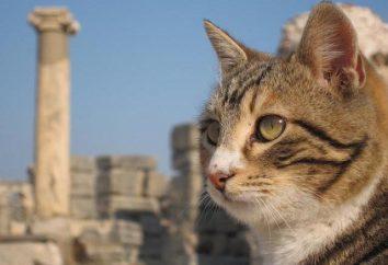Anatolian Pies: opis charakteru tej rasy, funkcje i ciekawostki