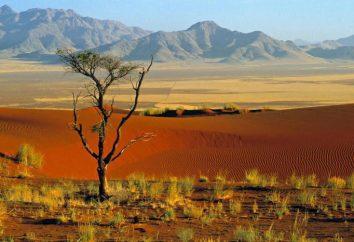 La position de l'Afrique par rapport aux autres continents et les océans, les îles, les baies, les détroits. Quelles sont les caractéristiques de la situation géographique de l'Afrique?