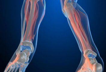 Quel est le sens musculaire? sa valeur