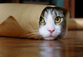 Co lepiej wybrać witaminy dla wykastrowanych kotów?