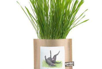 Pourquoi le chien mangent de l'herbe? A propos des herbes et des chiens de digestion