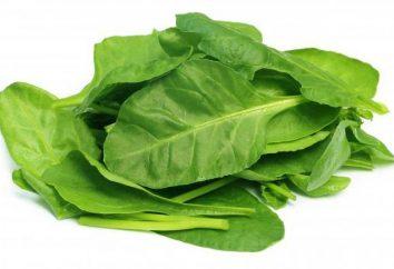 Come coltivare gli spinaci su un davanzale in un appartamento?