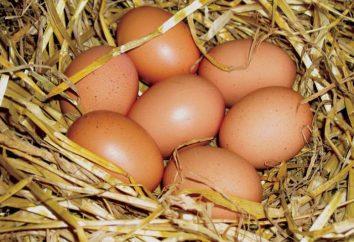 dieta del huevo durante 4 semanas: menú detallado (desayuno, almuerzo y cena)