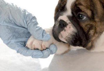 "Clínicas veterinarias ""alfa"" en Balashikha: Servicios y testimonios"