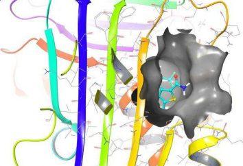 Ein Mangel an Alpha-1-Antitrypsin: Symptome, Ursachen, Diagnose und Behandlung