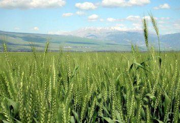 EM Technologie: description et application. agriculture naturelle