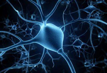 Ces capacités cognitives atteignent un pic quand une personne vieillit