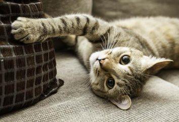 Evrochehol para o sofá: como escolher o tamanho correto, quais são suas vantagens?