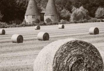 """Como fazer uma foto preto e branco em """"Photoshop"""": Instrução para iniciantes"""