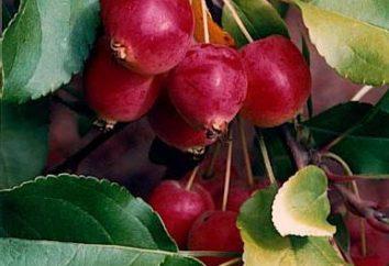 Marmelade und Kompott von Ranetki