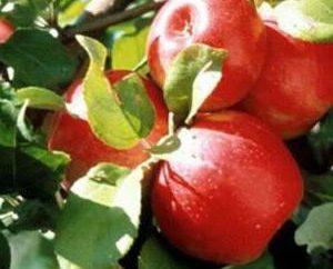 compota de manzana en el invierno