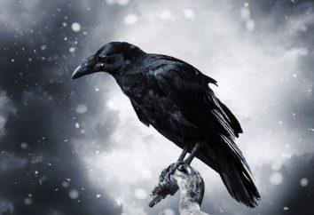 chambre Raven: Description et caractéristiques