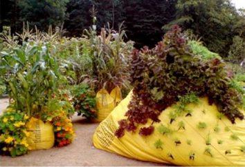 Creativamente decorar su jardín con las manos