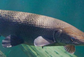 Le monde la plus étonnante de poissons