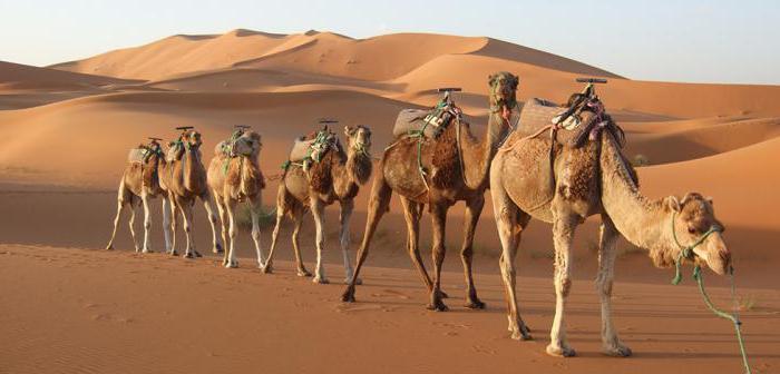 tiere in der wüste anpassung