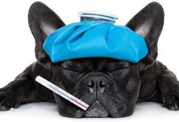 """Imunofan"" per i cani: istruzioni per l'uso, analoghi e feedback. E 'possibile gatti ""Imunofan""?"