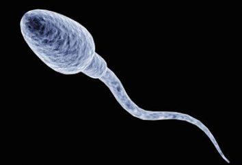 Gibt es Protein im Sperma? Wie viel Protein im Sperma?