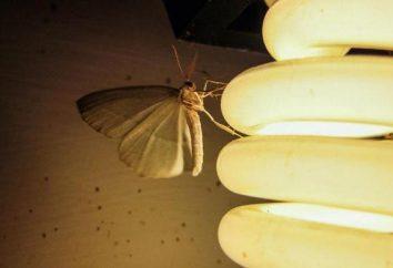 Dlaczego ćma leci do światła? Jaki charakter ma?