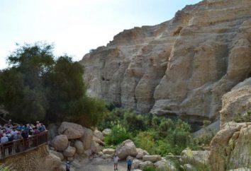 Reserva Natural de Ein Gedi: descrição e comentários