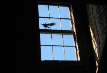 """Firmar """"un pájaro golpeó la ventana."""" ¿Por qué es así?"""