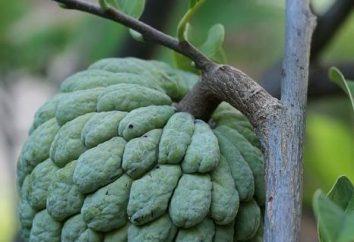 Die süßesten Früchte in der Welt – ist das, was?