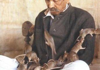 ¿Cuántas vidas de rata? una pregunta retórica