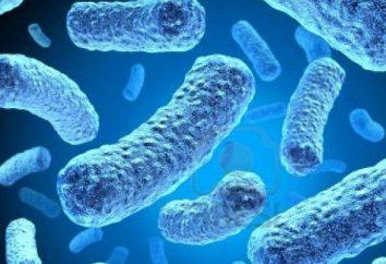La biodiversité: ce que les organismes sont procaryotes?