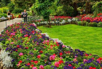 Dokonywanie ogrody kwiatowe – tworzenie i podziwiam
