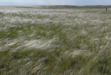 problemi ambientali della zona di steppa: cause e soluzioni