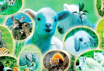 Systematique est une science qui étudie la diversité biologique de la planète