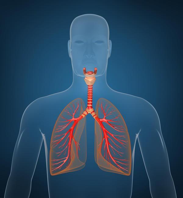 Trachea und Bronchien: Funktionen und Krankheiten