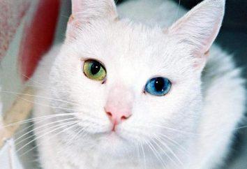 Dlaczego koty rodzą się z innymi oczami?