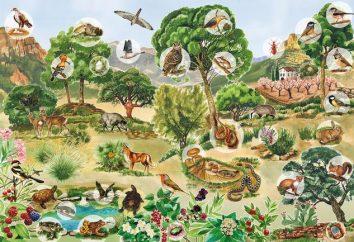 Biocenoza – przykłady. Naturalne i sztuczne biocenozy