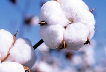 Kulirka – co tkanina? Jego cechy i aplikacje