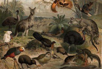 Fauna: o que é esse termo?