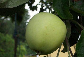 Papirovka – mela, amato da tutti