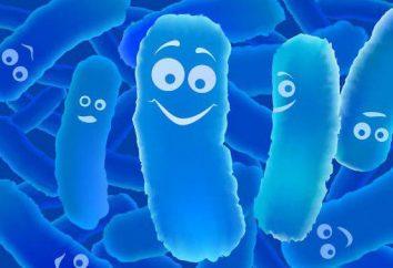 Prébiotiques .. il Probiotiques et prébiotiques pour l'intestin – liste et pour l'application intsruktsiyami