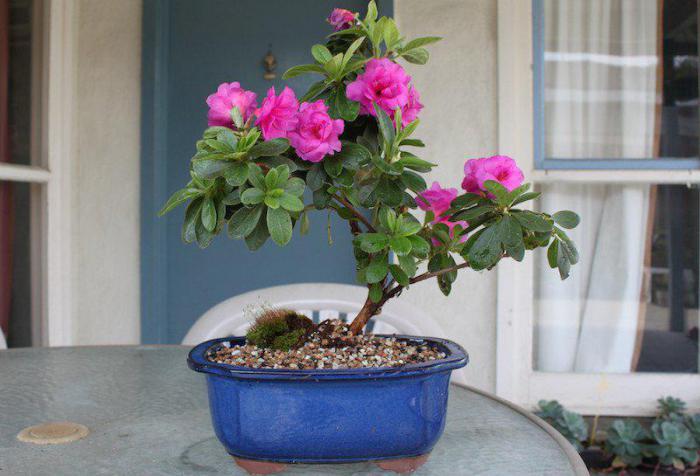 Um Sich Zu Schützen, Obzavedites Pflanzen, Die Die Luft In Ihrem Haus  Reinigen Können. Sie Sehen Auch Schön, Und Das Haus Ist Mit Positiver  Energie Gefüllt.