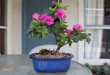 « Bombe d'oxygène »: les plantes peuvent purifier l'air dans votre maison?