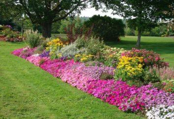 Aiuola fioritura continua – una sinfonia senza fine di colore e la bellezza
